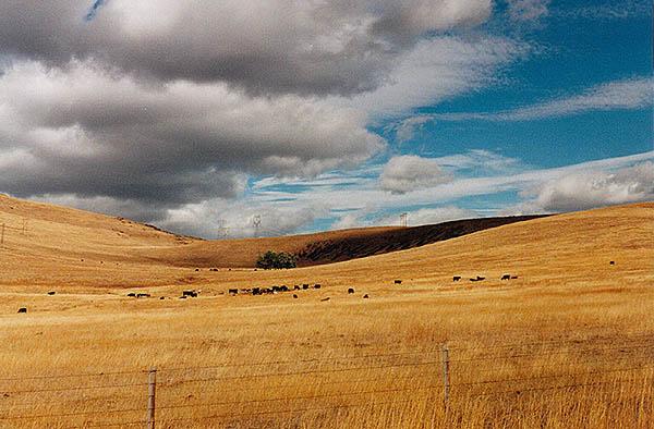 Mulshell Meadows